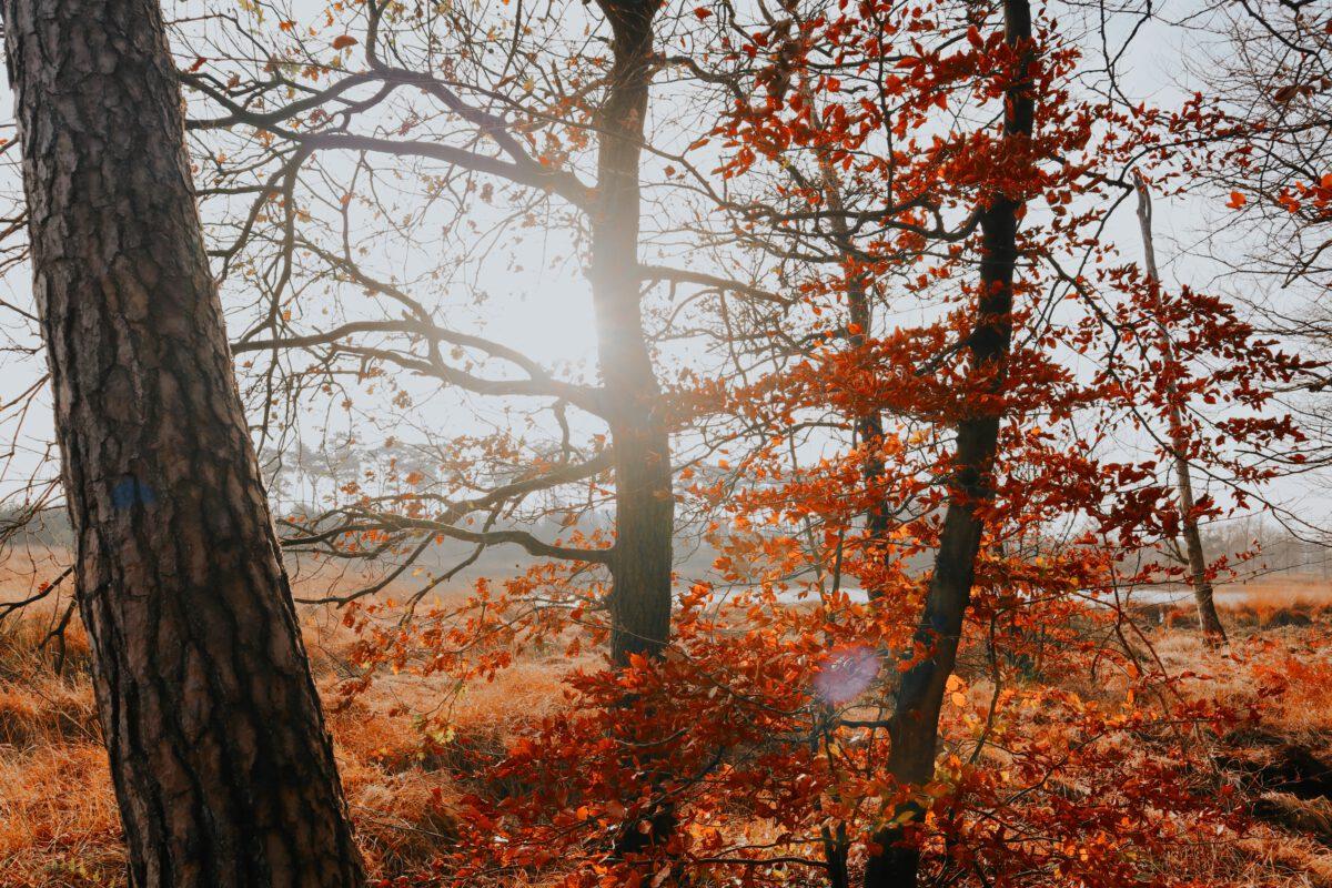 uitjes herfst
